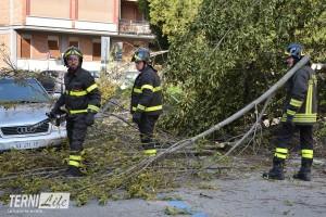 vigili del fuoco albero cadutoSTE_4032