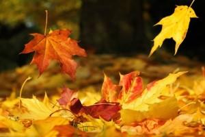 foglie secche autunno