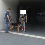 Il cane antidroga al lavoro
