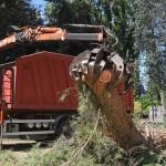 alberi_abbattuti_via_lungoneraSPR_4498