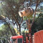 alberi_abbattuti_via_lungoneraSPR_4525