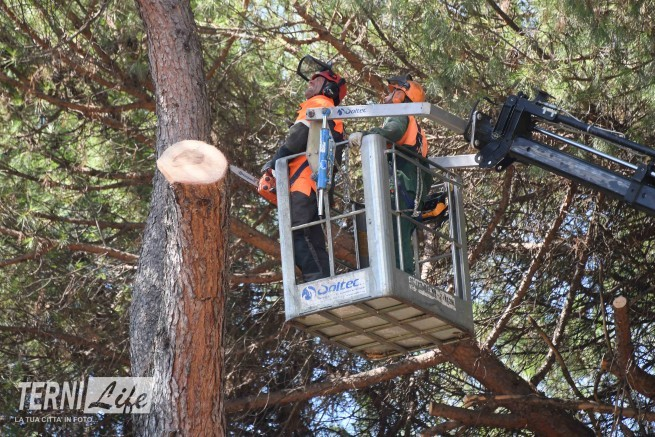alberi_abbattuti_via_lungoneraSPR_4534
