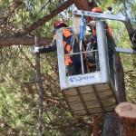 alberi_abbattuti_via_lungoneraSPR_4541