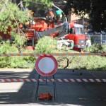 alberi_abbattuti_via_lungoneraSPR_4594