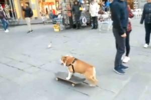 cane_skate