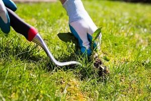 manutenzione-parchi-e-giardini-2_modificato-1