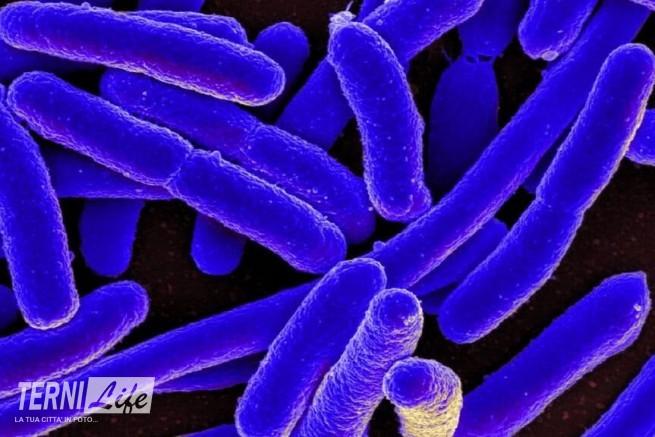 escherichia-coli